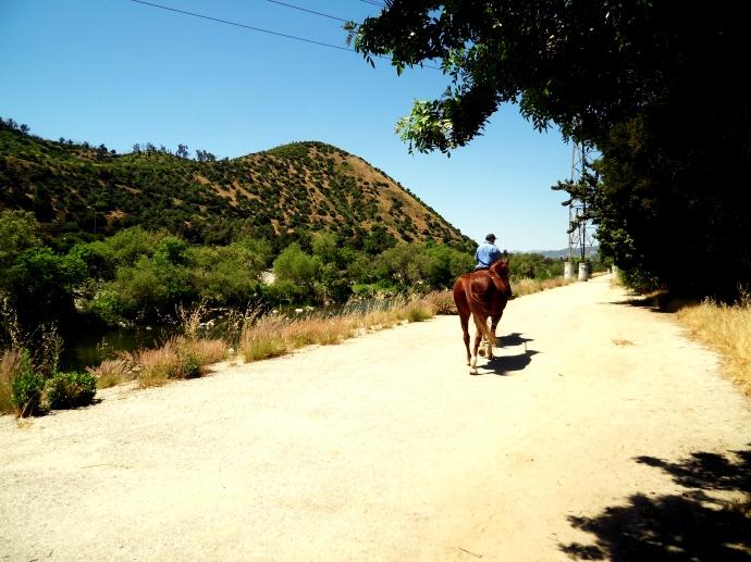River rider, Los Feliz